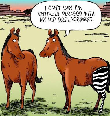 "<img src=""http://www.Regoparkhealthcarealliance.com/RPHCA-Patient-Education"" title=""Rego-Park-Queens-Physical-Therapy-For-Hip-Replacement-Treatments"" alt=""Rego-Park-Queens-NY-Physical-Therapy-And-Orthopedics-For-Post-Surgery-Hip-Pain"">"